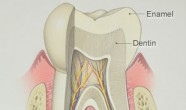 Smaltul dentar