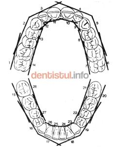 Impartirea grupelor de dinti