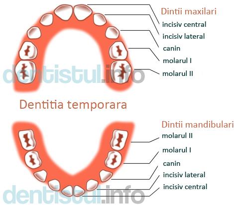 Dentitie temporara