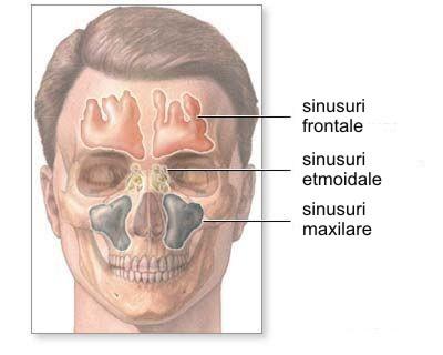 Sinusul maxilar